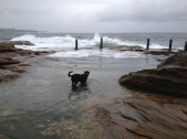 Tidal pool, south Coogee
